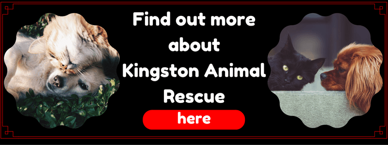 Portrait of Find out More about Kingston Animal Rescue