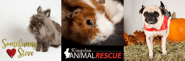 Portrait of Rabbit Kingston Animal Rescue